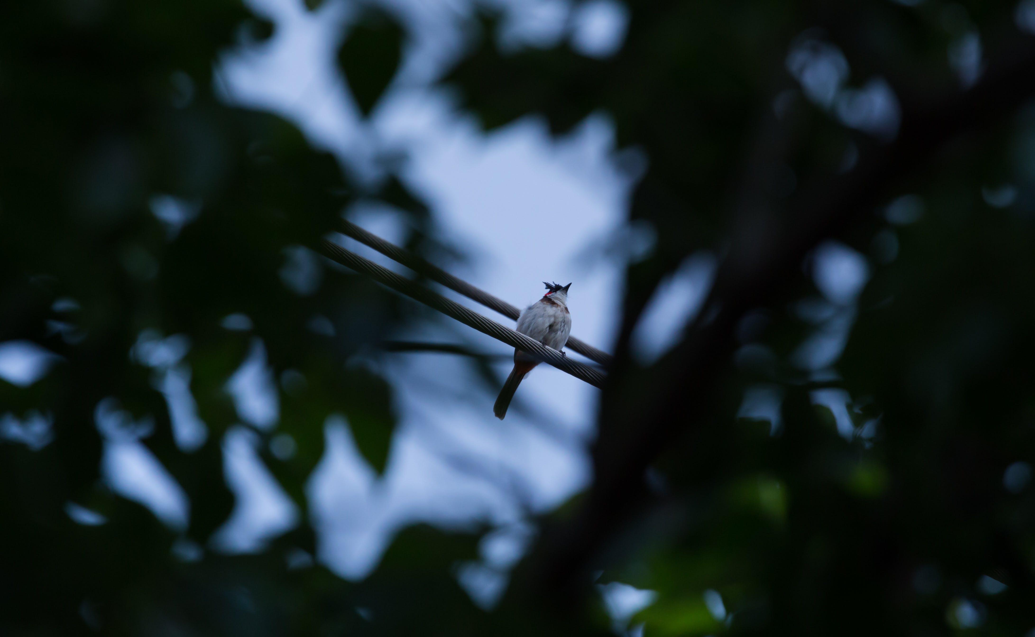 Free stock photo of bird, blue, blue sky