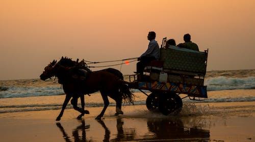 Fotos de stock gratuitas de caballo, dice adiós, India, karnataka