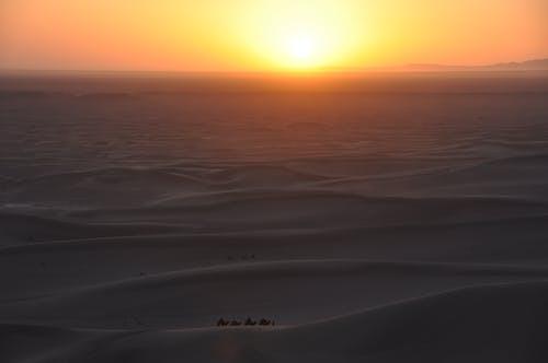 Foto profissional grátis de camelo, caravana, deserto