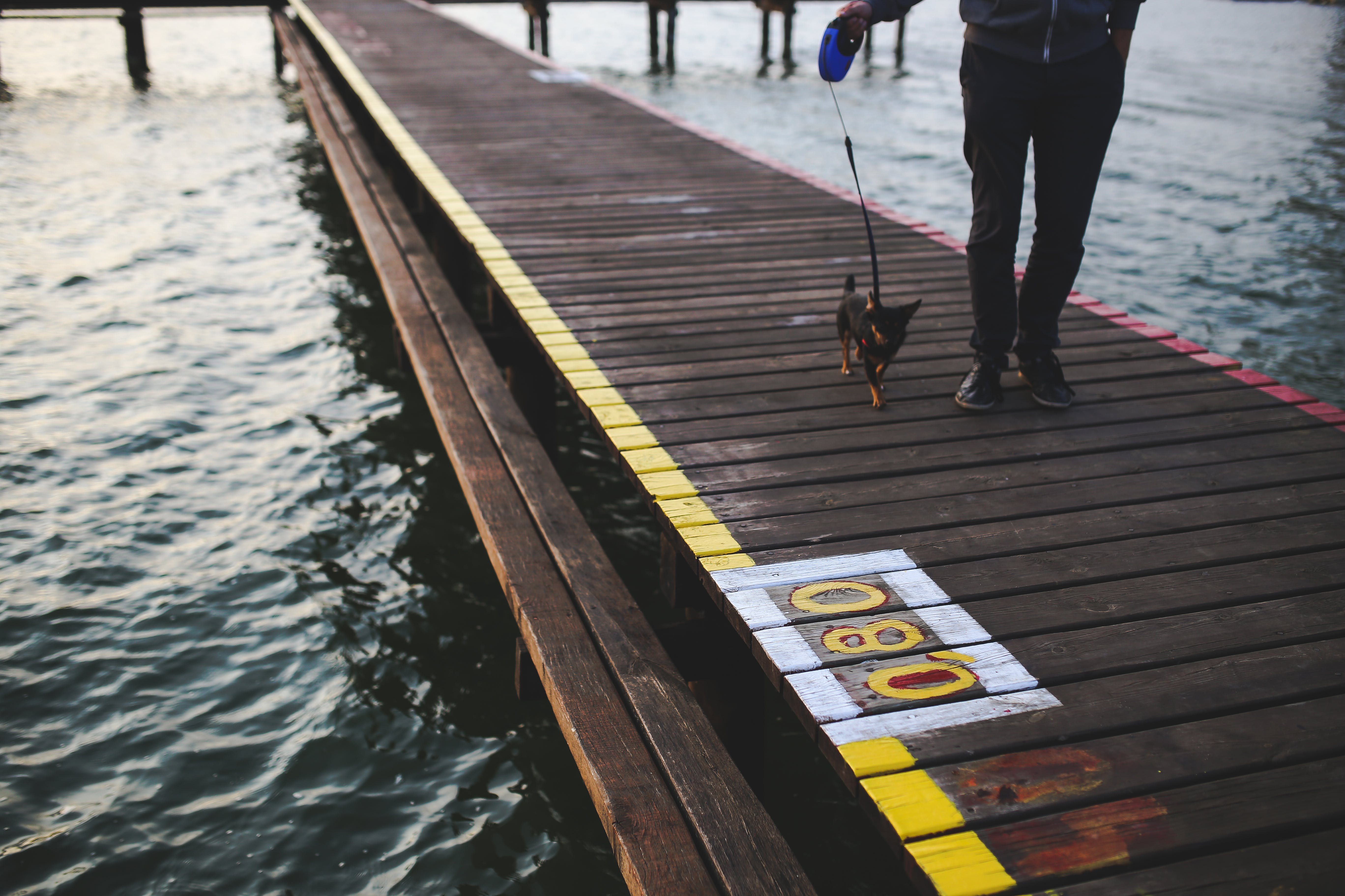 Evening walk with the dog along the pier
