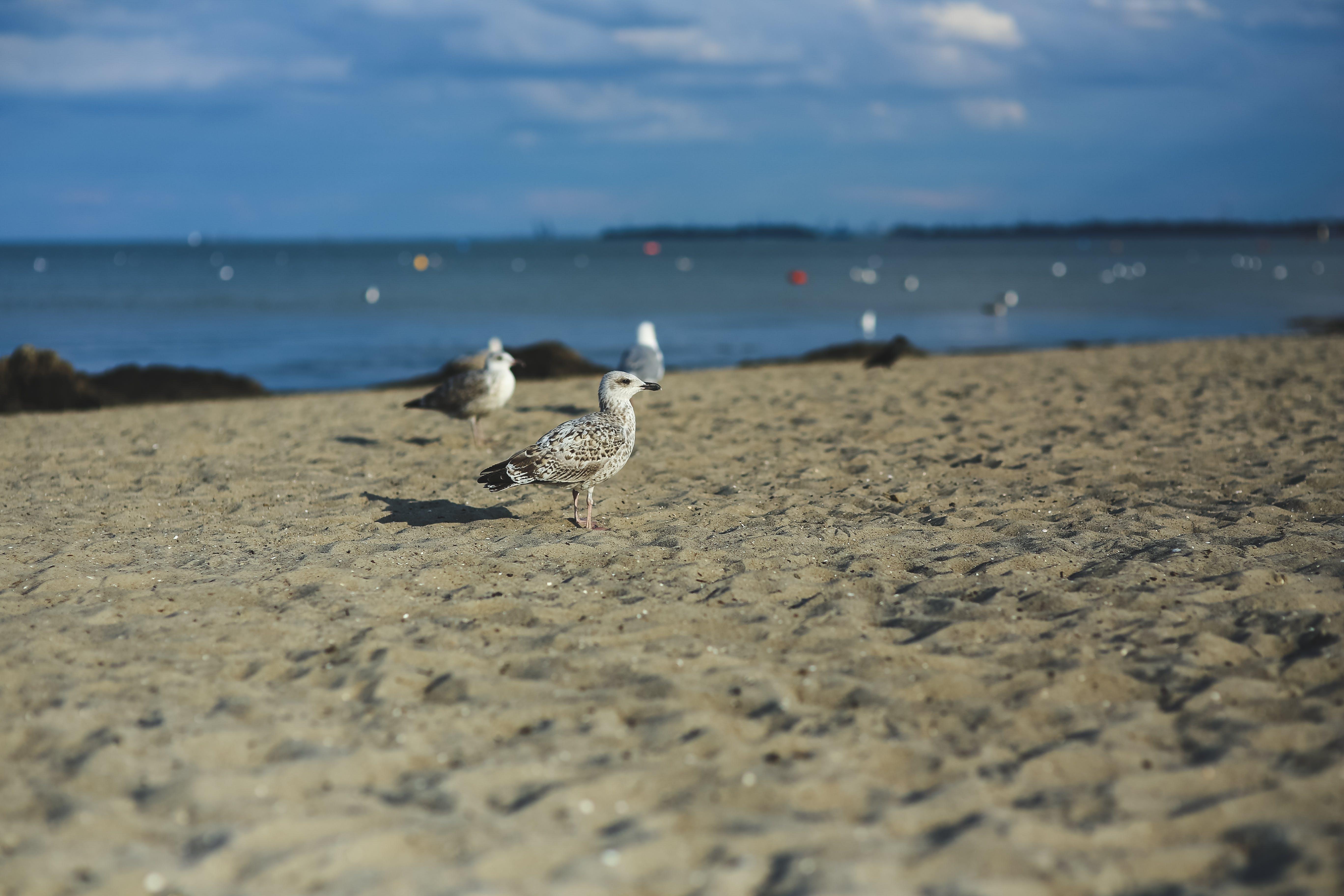 갈매기, 동물, 모래, 물이 있는 경치의 무료 스톡 사진