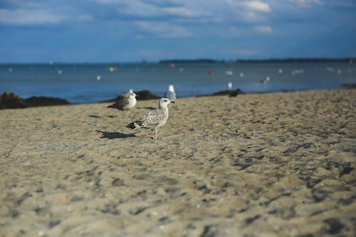 Ilmainen kuvapankkikuva tunnisteilla eläin, hiekka, hiekkaranta, järvimaisema