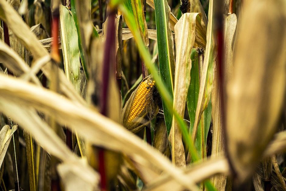 agriculture, blur, bright