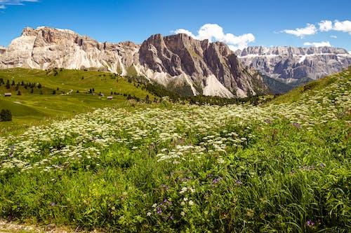 Green Grass Field Near Rocky Mountain Under Blue Sky
