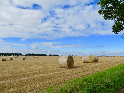 Free stock photo of blue sky, clouds, country, harvest