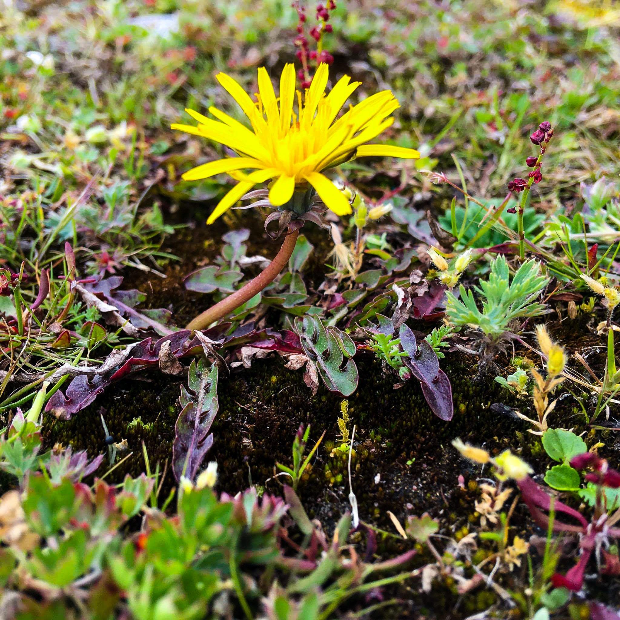 Free stock photo of beautiful, beautiful flowers, flower, mothernature