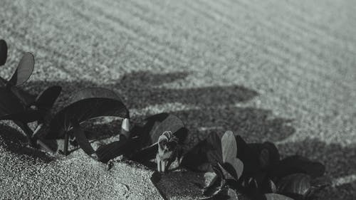 Immagine gratuita di bianco e nero, fiori