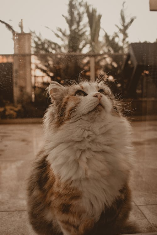 Free stock photo of animal, animalphotos, cat