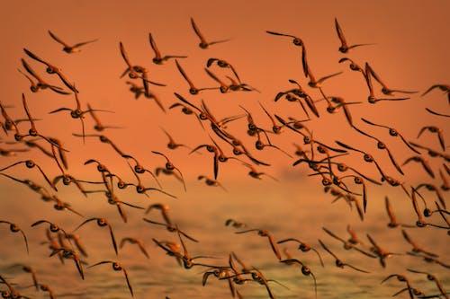 Стая птиц, летающих над водоемом