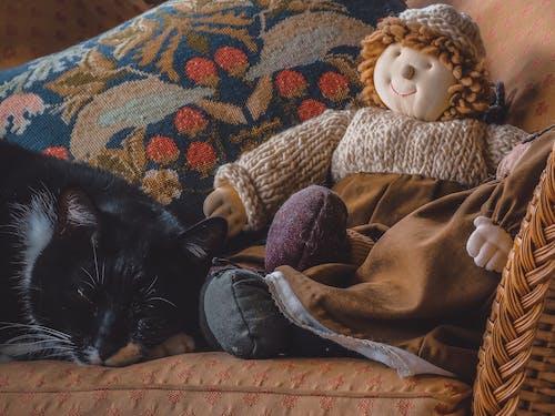 Бесплатное стоковое фото с descansar, gato descansando, gatos, mascota