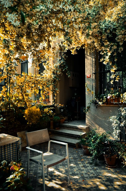 Patio of old residential house with creeping plants in autumn
