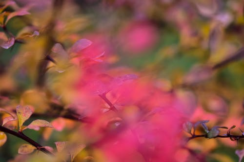 Blurred delicate pink flower growing against colorful bush with yellow leaves in garden on autumn day