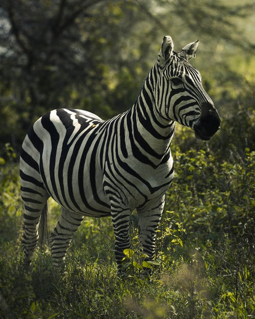 Základová fotografie zdarma na téma Afrika, býložravec, divočina, divoký