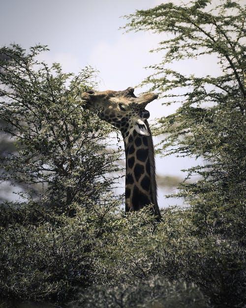 Základová fotografie zdarma na téma Afrika, barbarský, divočina, divoký