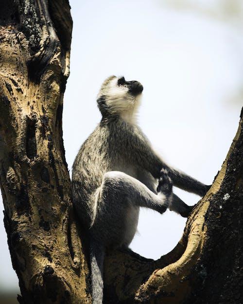 Základová fotografie zdarma na téma Afrika, divočina, divoký, dřevo