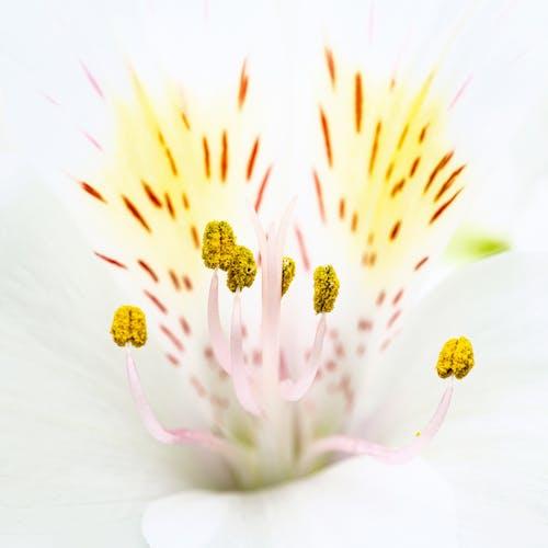 Kostenloses Stock Foto zu aroma, aromatisch, biologie