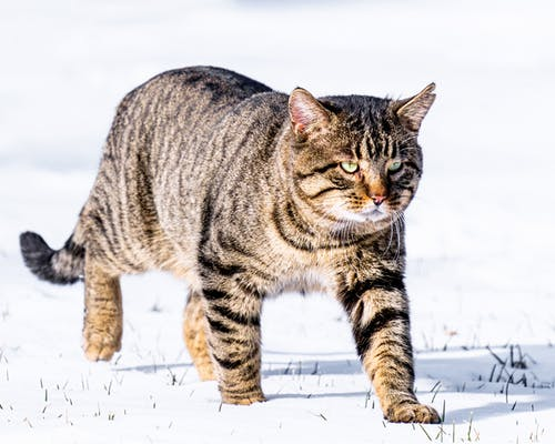 Foto profissional grátis de ameaça, animal, ao ar livre