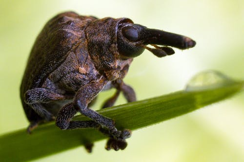 Macro Shot of a Beetle Perched on a Leaf
