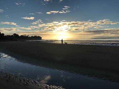 Free stock photo of beach, sunrise, walking dog