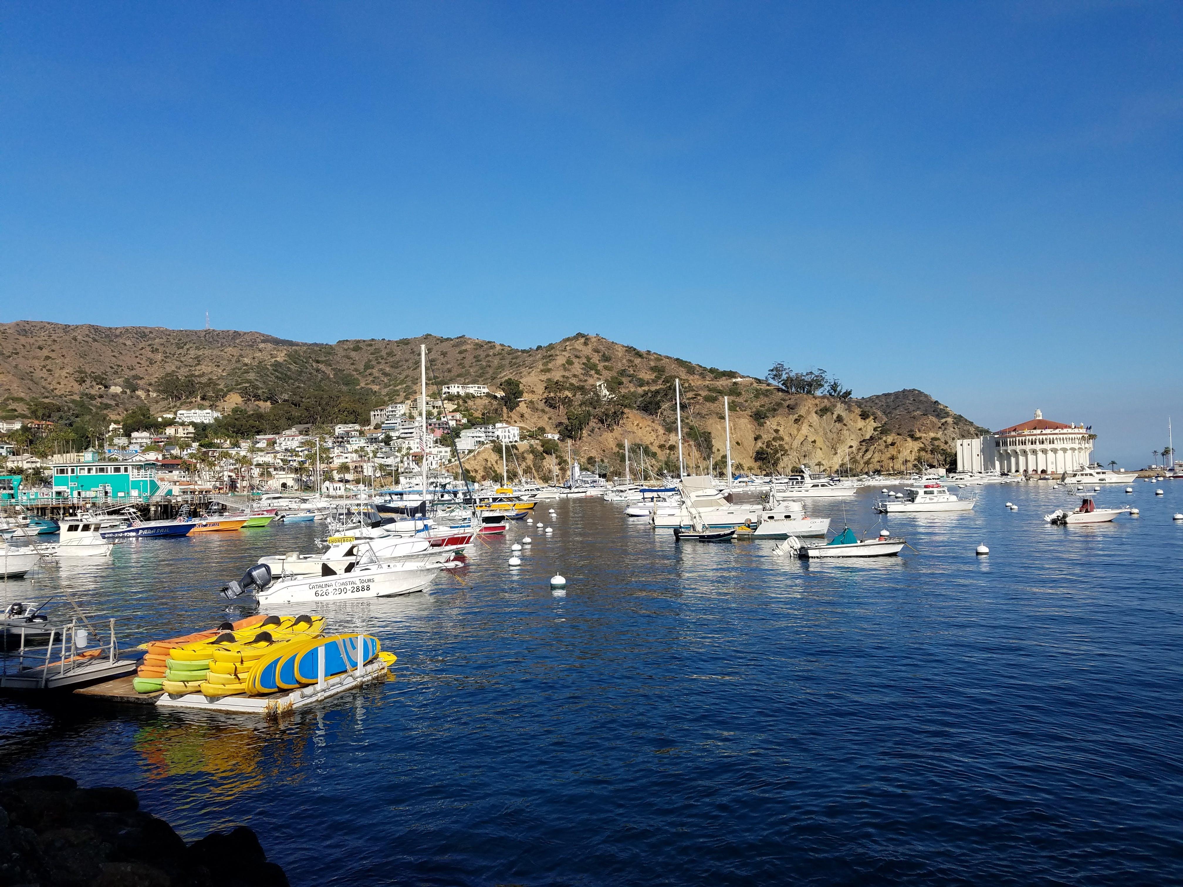 Free stock photo of boat, catalina island, island, ocean