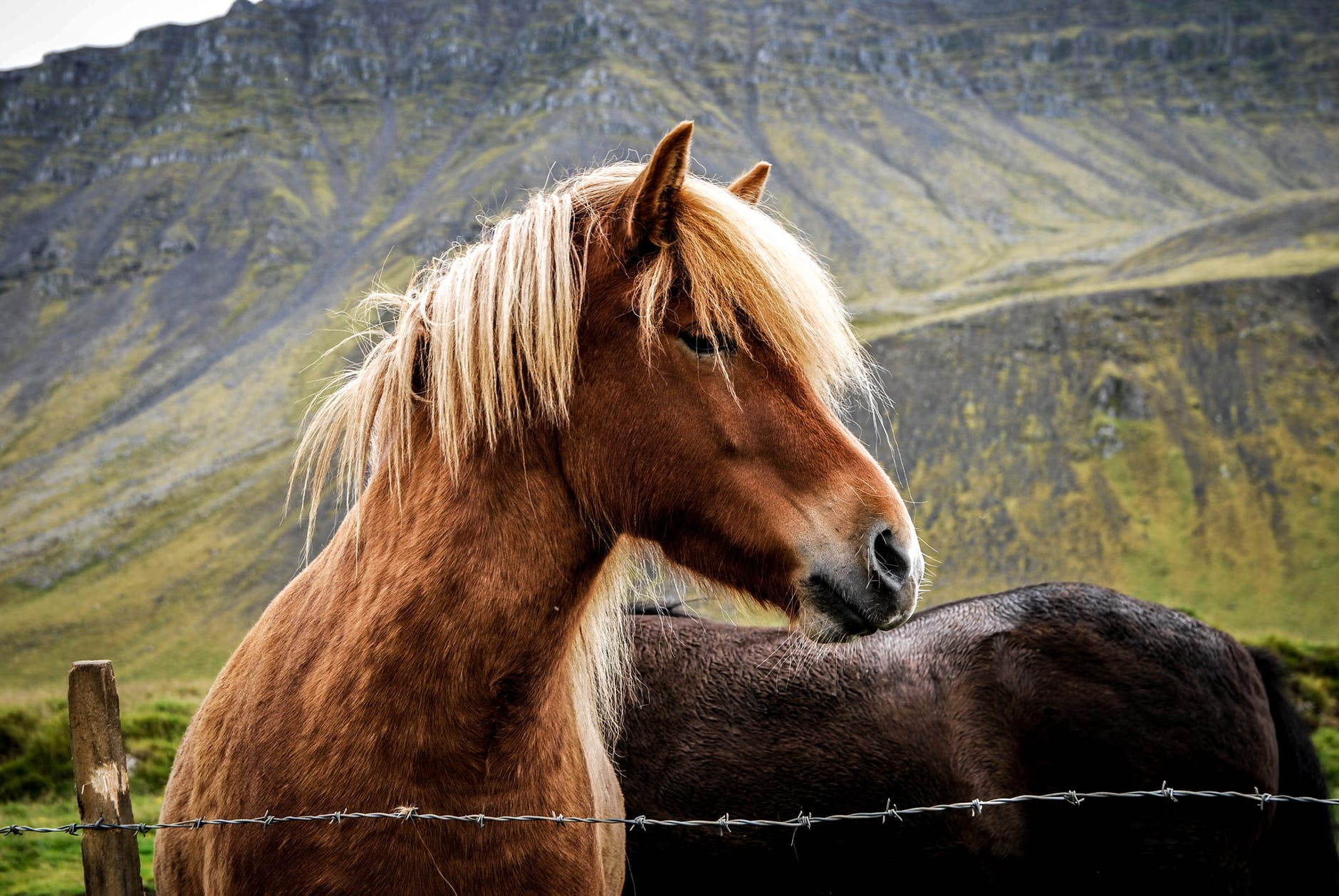 two horse inside the bob wire fences