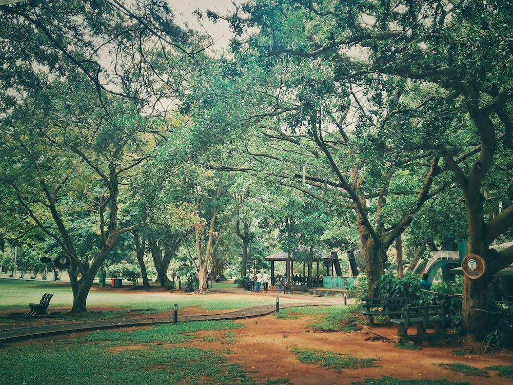 drzewa, park miejski, po deszczu