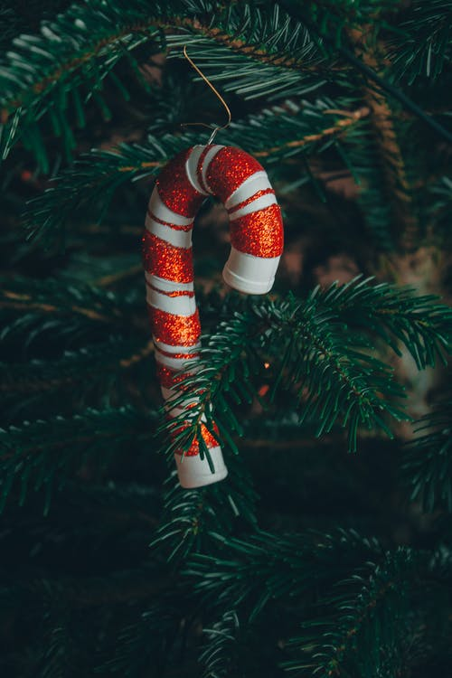 Red and White Candy Cane on Green Leaves