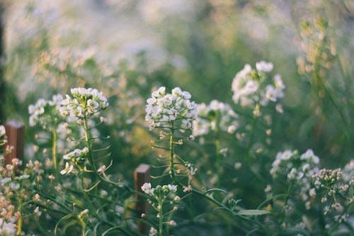 Immagine gratuita di fiori, fiori bellissimi, giardino, giardino di fiori