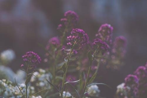 Immagine gratuita di dissolvenza, fiori, fiori bellissimi, giardino