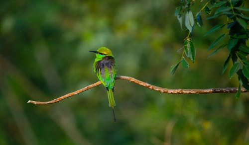 Tiny bee eater with bright plumage sitting on sprig of tree near deciduous plant in wild nature on blurred background