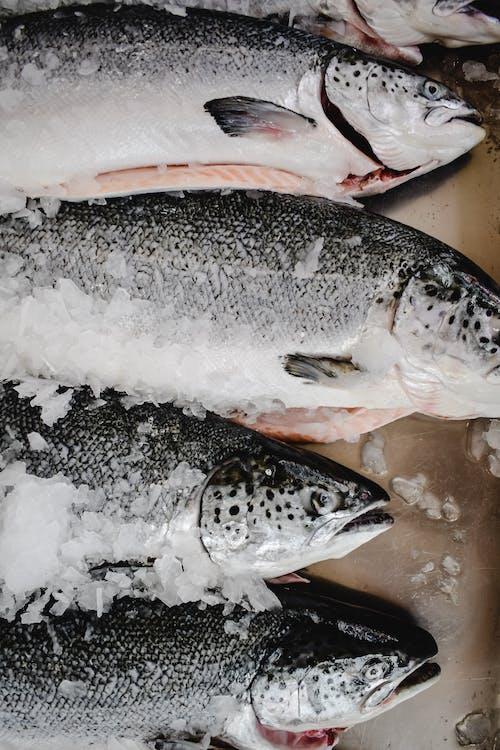 氷の上の白と黒の魚