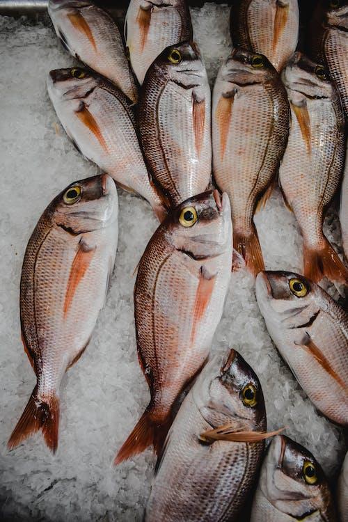 Základová fotografie zdarma na téma čerstvý, led, plody moře