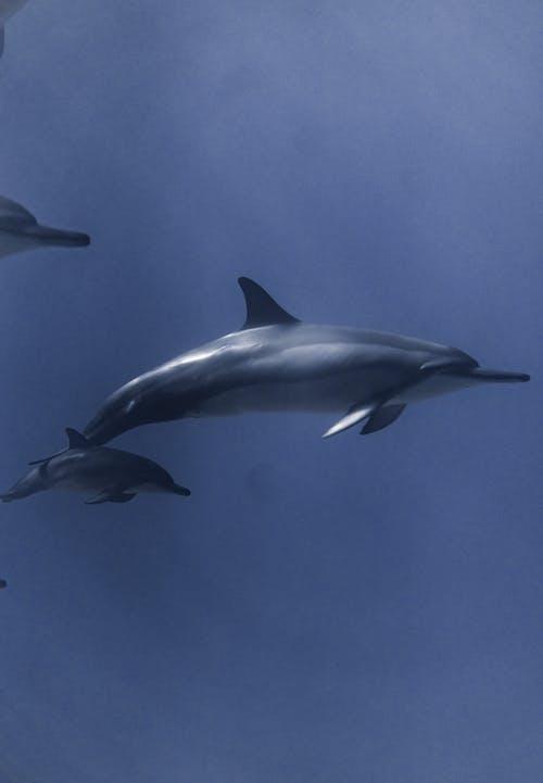 Dolphins swimming in deep ocean water