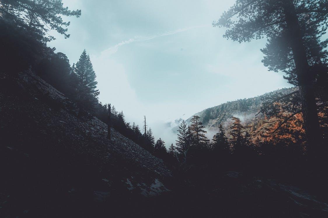 arbori, brazi, ceață