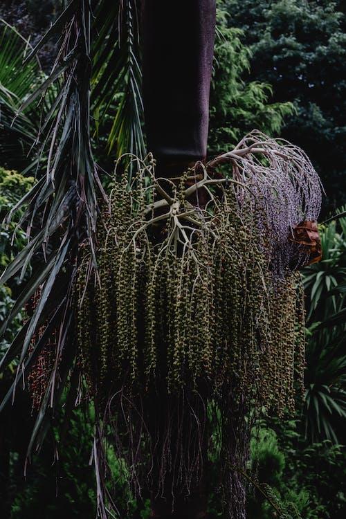綠色植物附近的綠色仙人掌植物