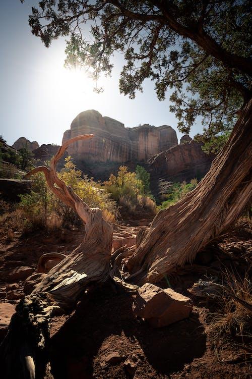 Základová fotografie zdarma na téma cestování, dřevo, hora, jehličnan