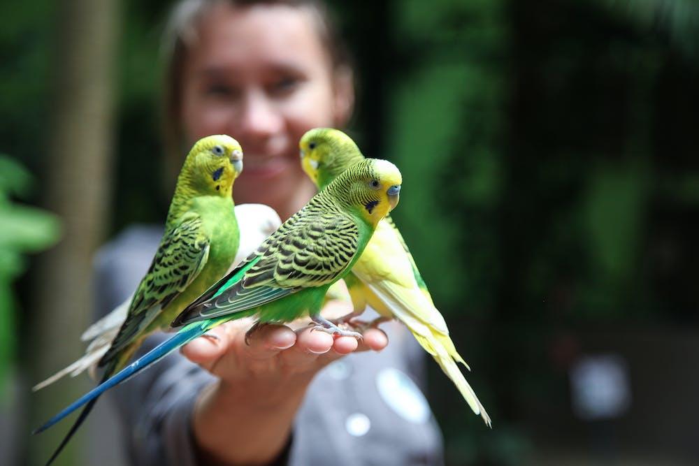 Parrot @pexels.com