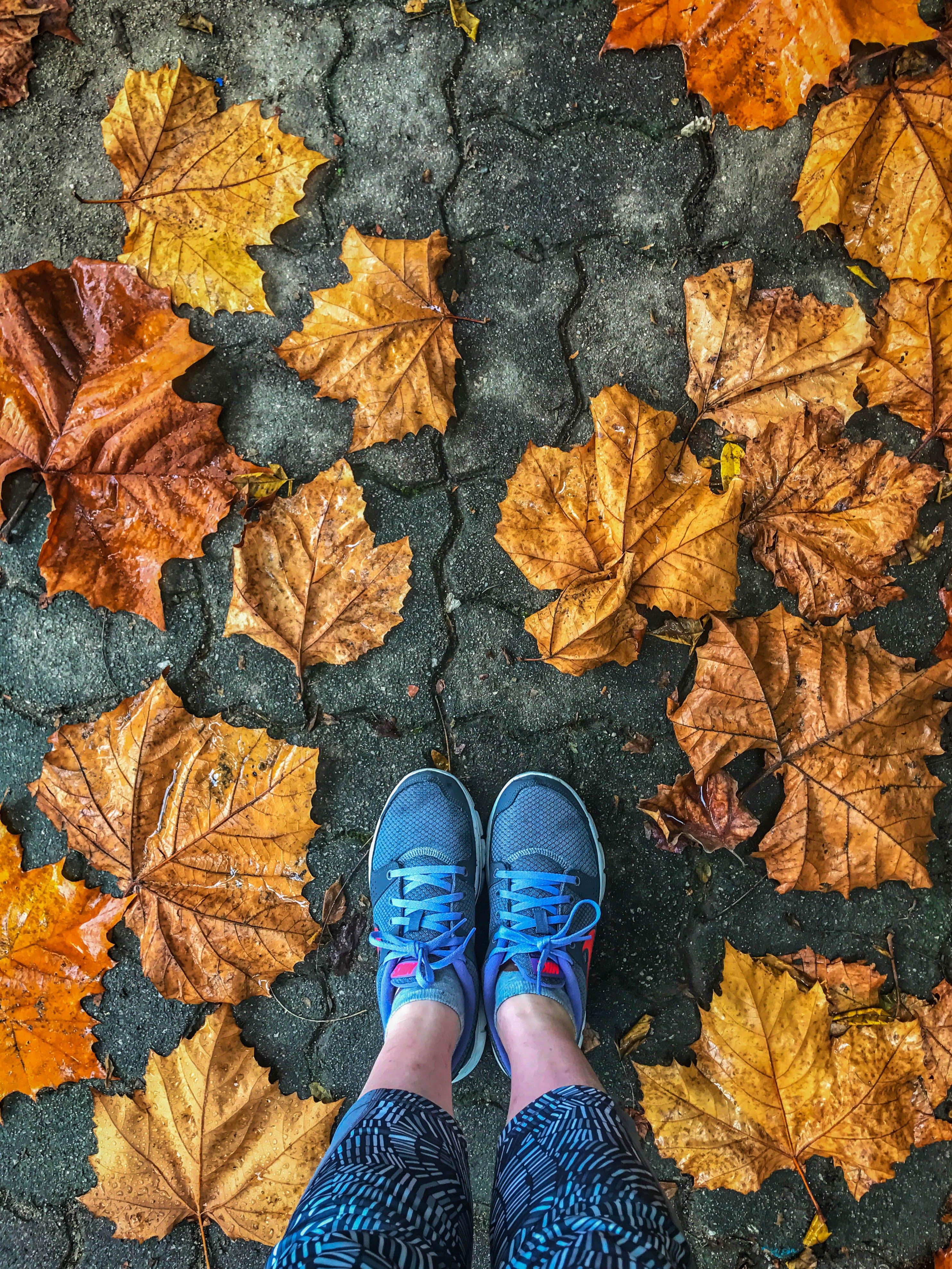 Free stock photo of #autumn, #autumnleaf, #autumnleaves, #fall