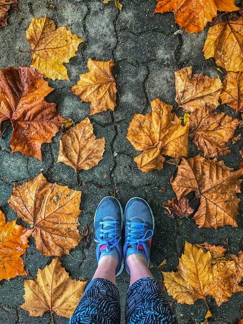 #autumnleaf, #maple, かえで, スポーツの無料の写真素材