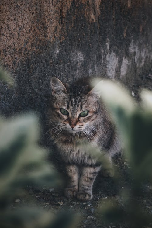 Brown Tabby Cat on Brown Concrete Wall