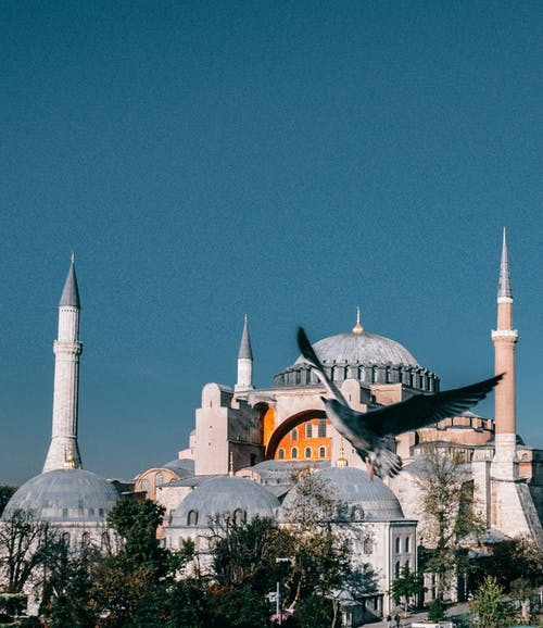 Picturesque aged Hagia Sophia cathedral with dome and minarets located in Istanbul against blue sky with flying bird in city