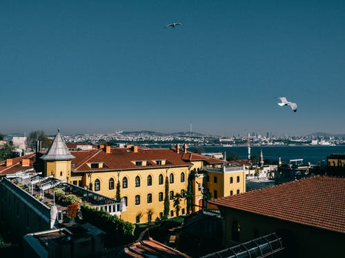 Picturesque scenery of seagulls soaring above picturesque coastal district in Istanbul on sunny day