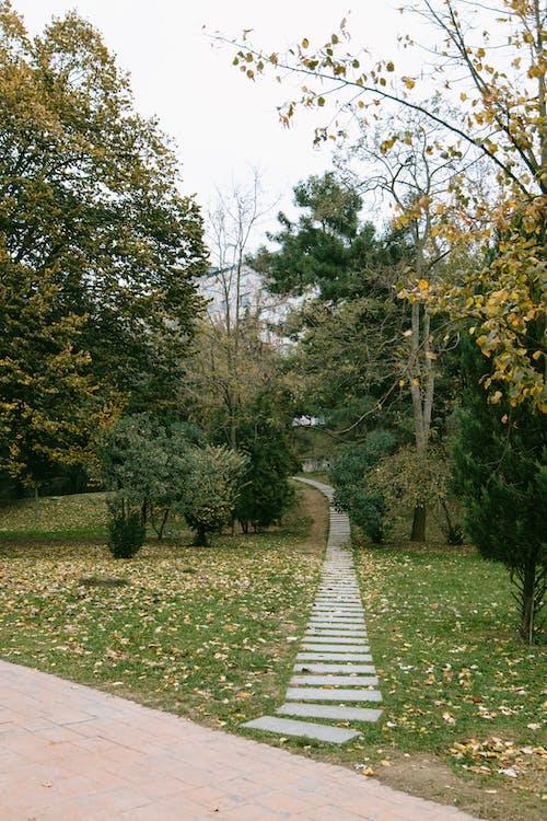 Chemin De L'herbe Verte Entre Les Arbres