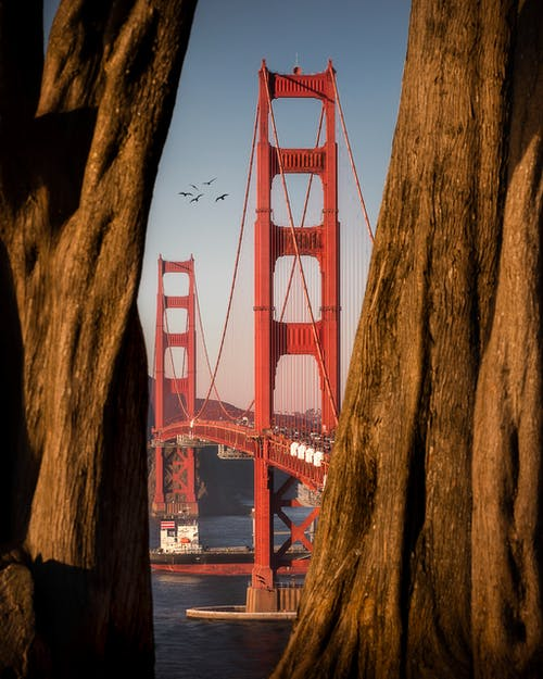 View from tree trunks on Golden Gate Bridge connecting San Francisco Bay and Pacific Ocean made in Art Deco style