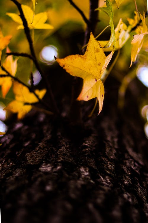 Free stock photo of autumn leaves, bare trees, beautiful nature, forest nature