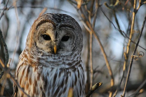 White and Gray Owl on Brown Tree Branch