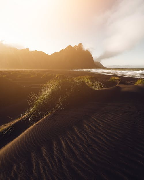 Erba Verde Sulla Sabbia Marrone Vicino Al Corpo D'acqua