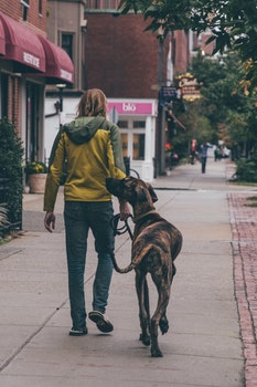 A Man Walking in The Street With His Dog