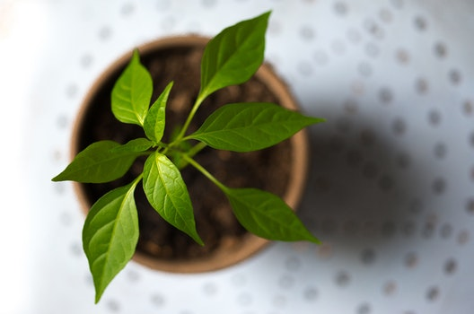 Selective Photography of Green Leaf Plant in Brown Pot