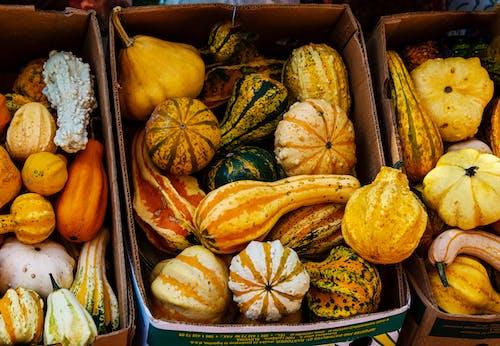 かぼちゃ, カボチャのつる, サンクスギビングの無料の写真素材